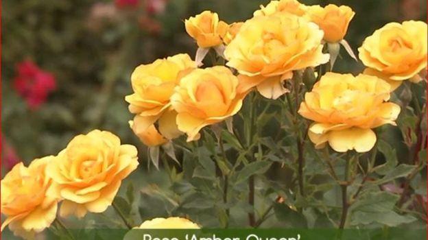Le jaune, une couleur qui revient à l'avant-plan