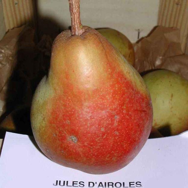 'Jules d'Airoles'