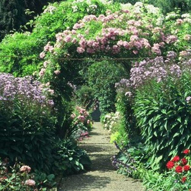 Les roses de Carolside