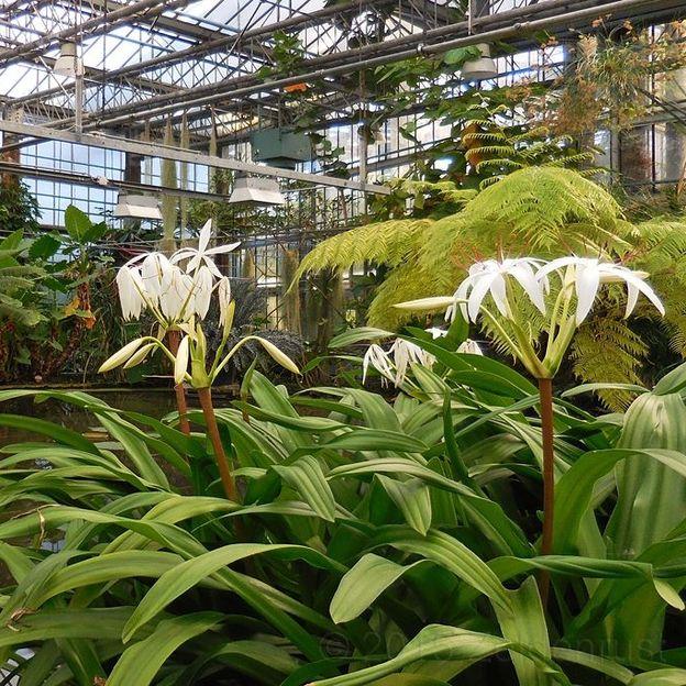 Un titan sous serre gand rtbf jardins loisirs for Acheter une serre de jardin en belgique