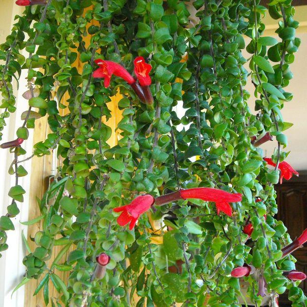 zoom sur les plantes d 39 int rieur rtbf jardins loisirs. Black Bedroom Furniture Sets. Home Design Ideas