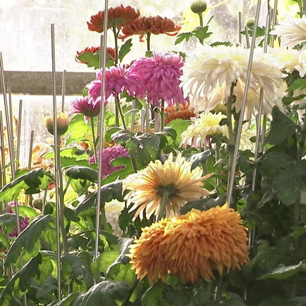 La multitude de variétés cultivées par Philippe