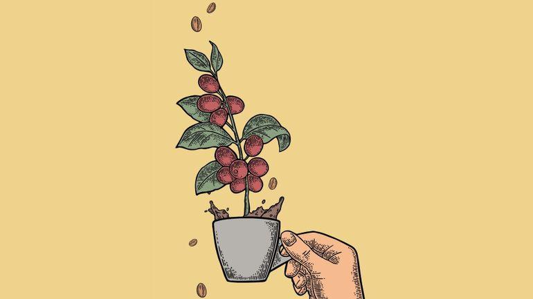 """Avec """"Histoires de café"""", le musée BELvue vous donne du grain à moudre"""
