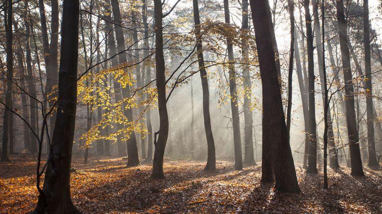 La gestion de la forêt de Soignes, tout un art