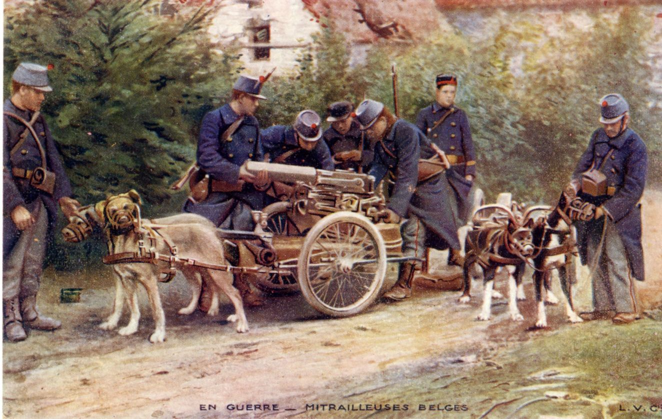 Dogs at war - Animals - RTBF World War 1