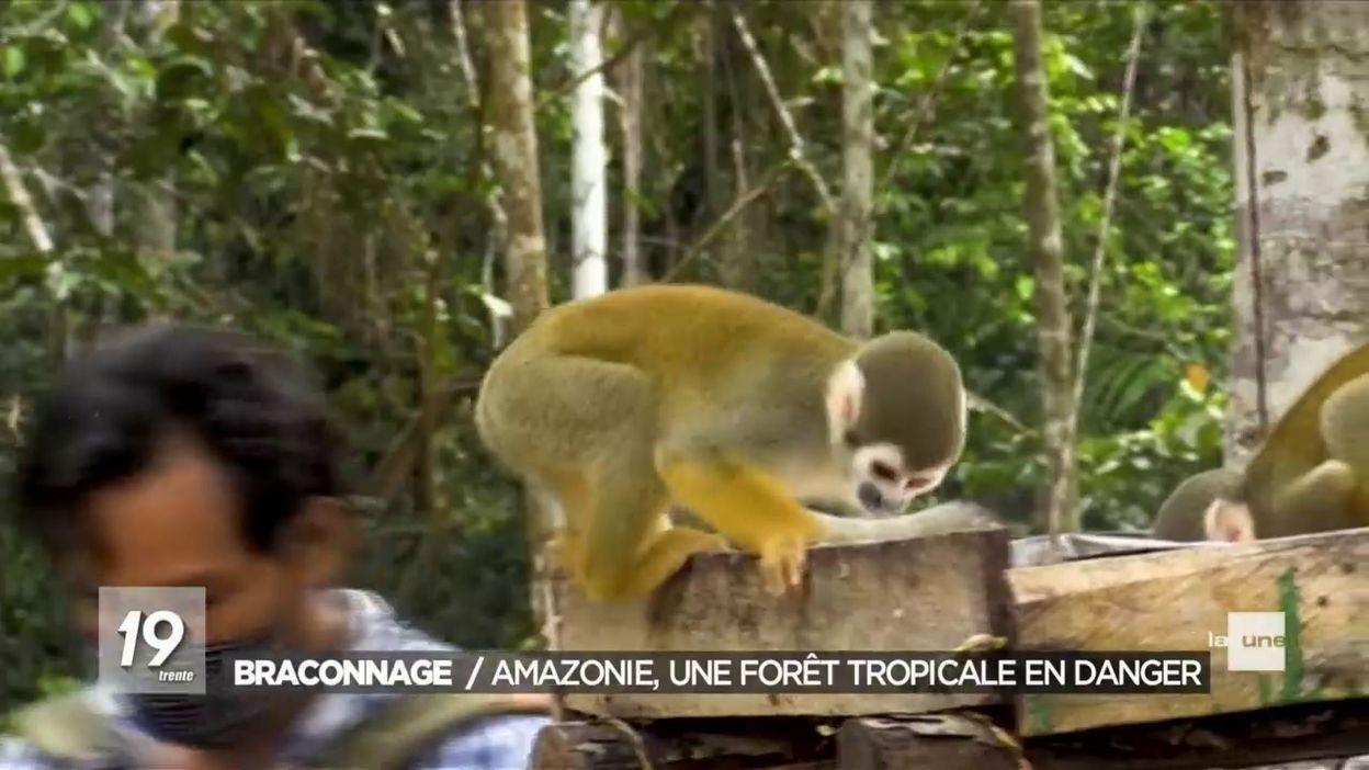 Amazonie : mobilisation et protection des singes
