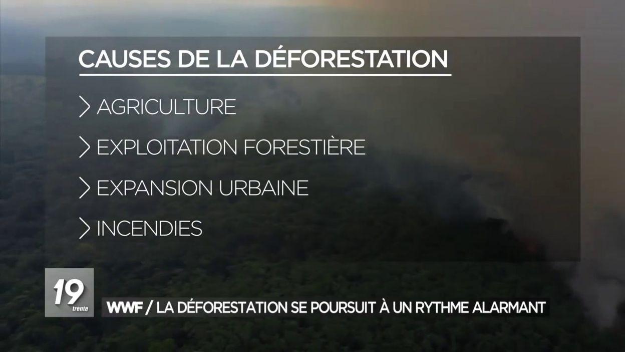 WWF / La déforestation se poursuit à un rythme alarmant