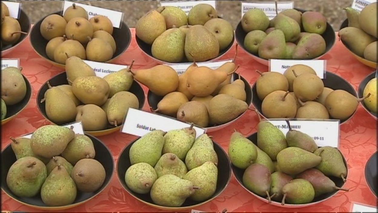 Les anciennes variétés de poires de la pépinière Guy Lemaire