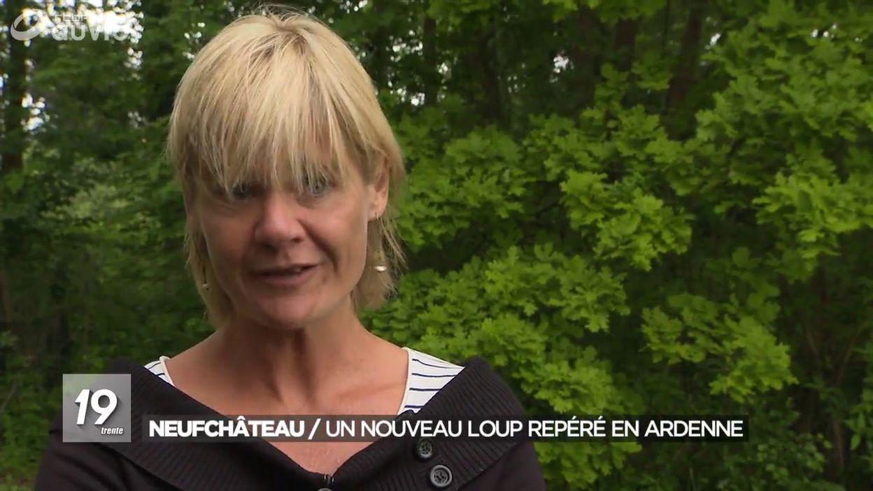 Un nouveau loup repéré du côté de Neufchâteau: il aurait parcouru 700 kilomètres pour venir en Belgique