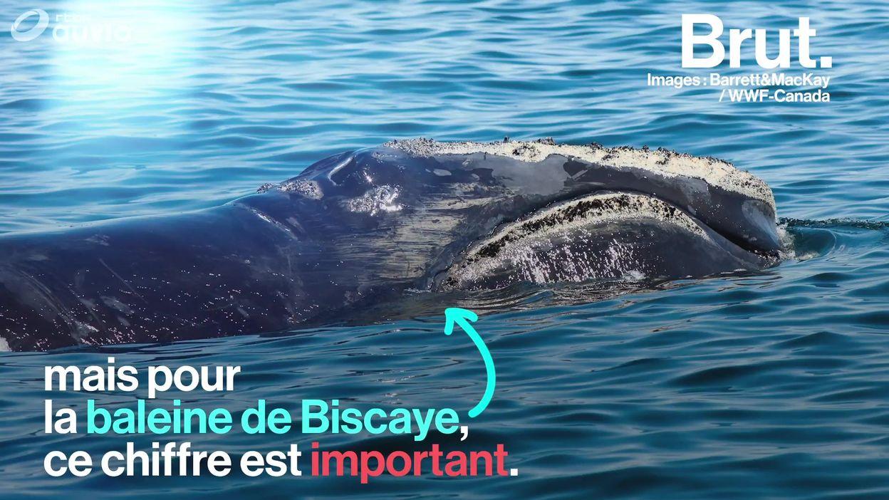 Bonne nouvelle pour l'une des baleines les plus menacées au monde
