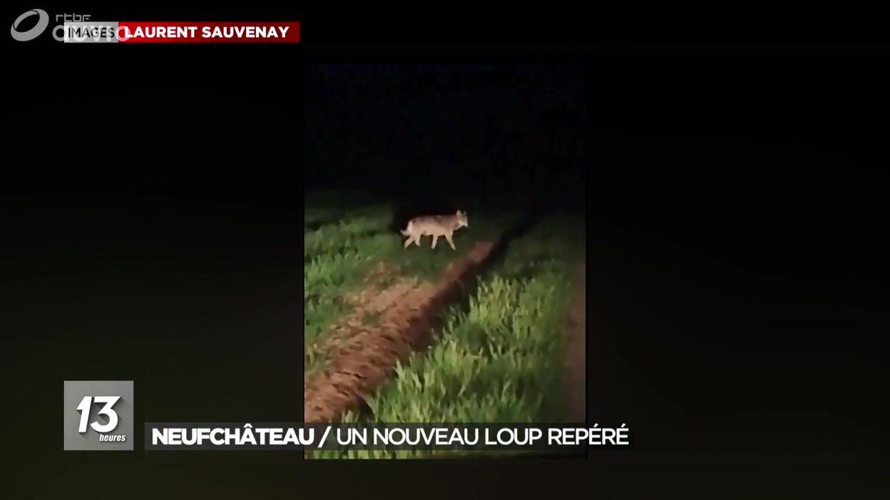 Un nouveau loup repéré du côté de Neufchâteau