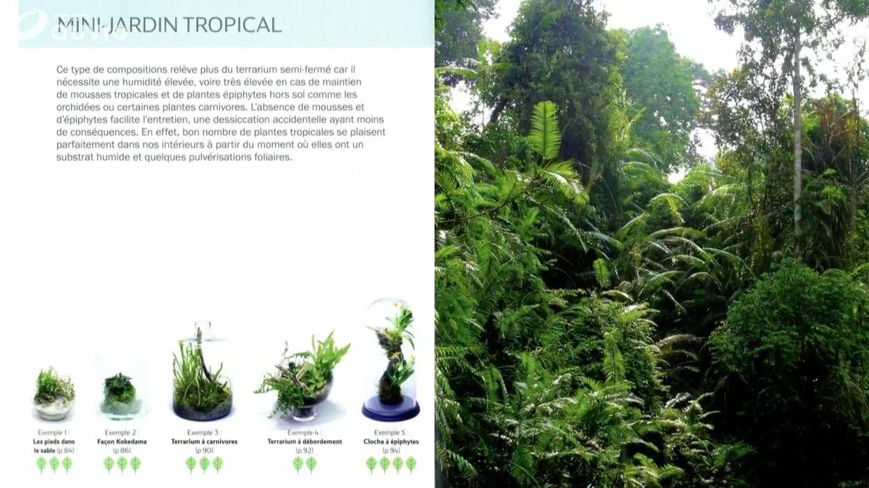 Luc Presente Le Livre Mini Jardins De Verre Terrariums Deco Pas
