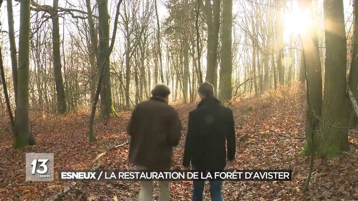 Forêt en cours de restauration.