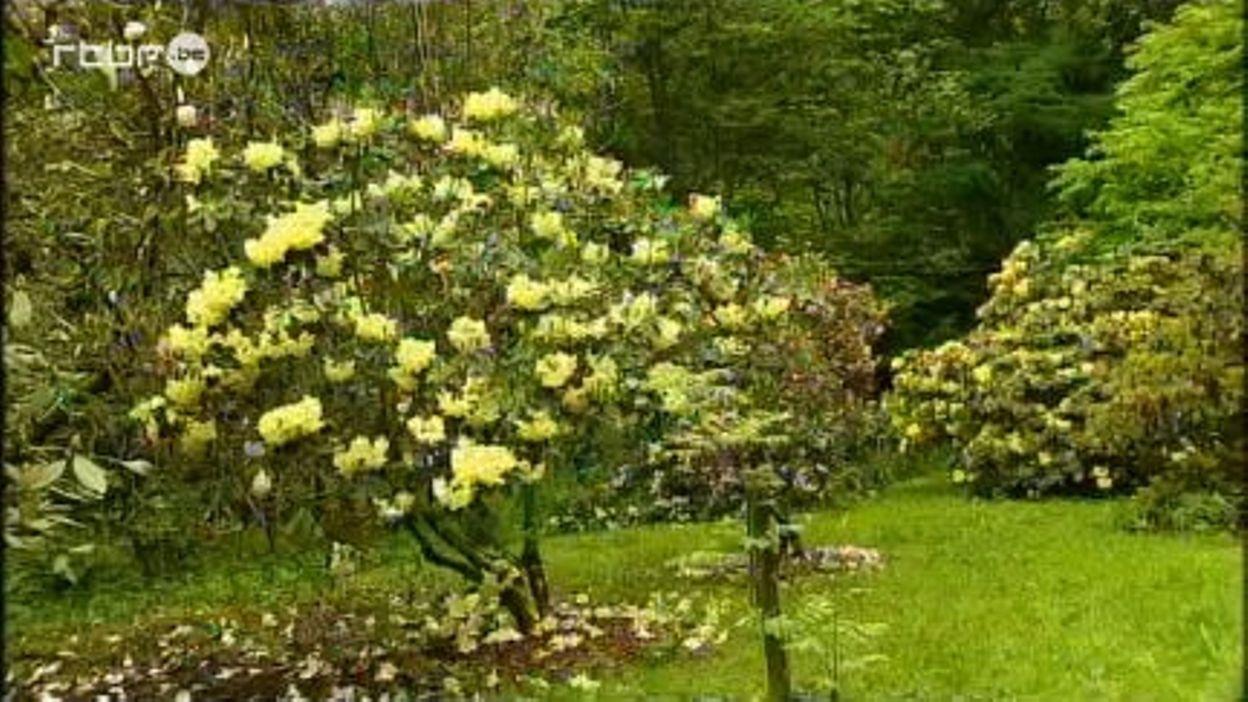 L'arboretum Robert Lenoir à Rendeux