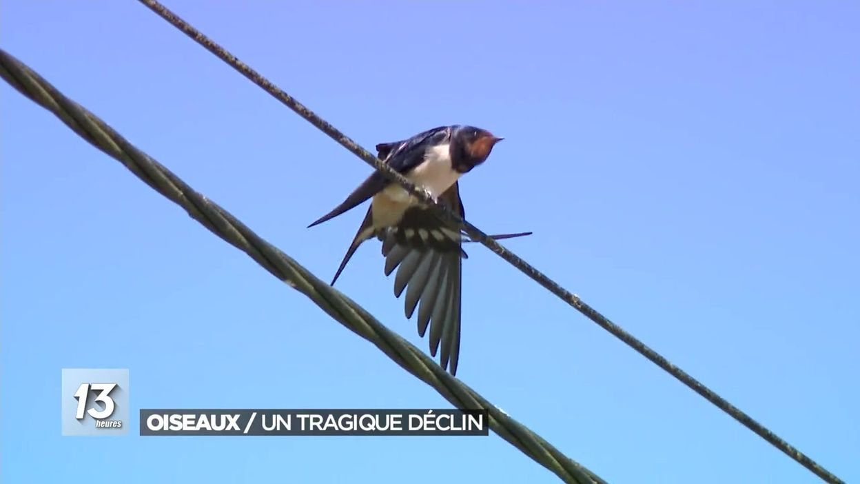 Natagora et les résultats du comptage des oiseaux