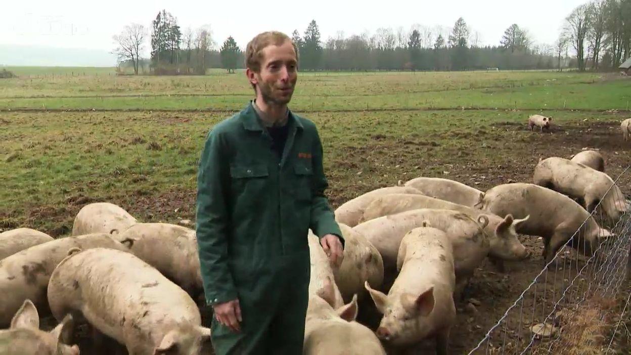 Porc wallon : une autre vie pour le cochon ?