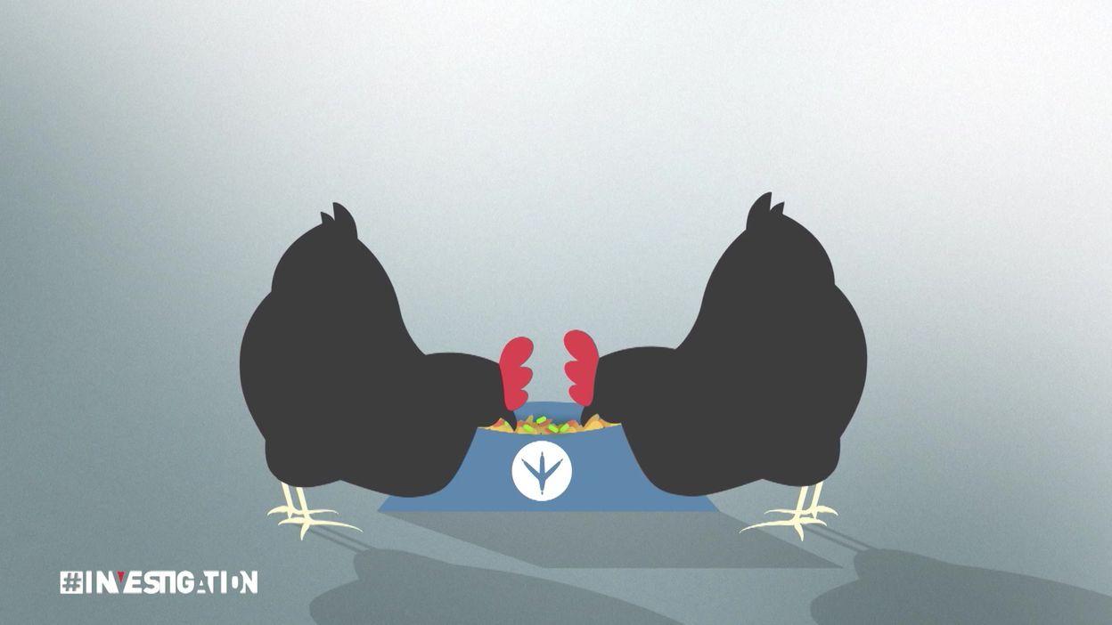 Vitamines B2 : OGM dans le bio ?
