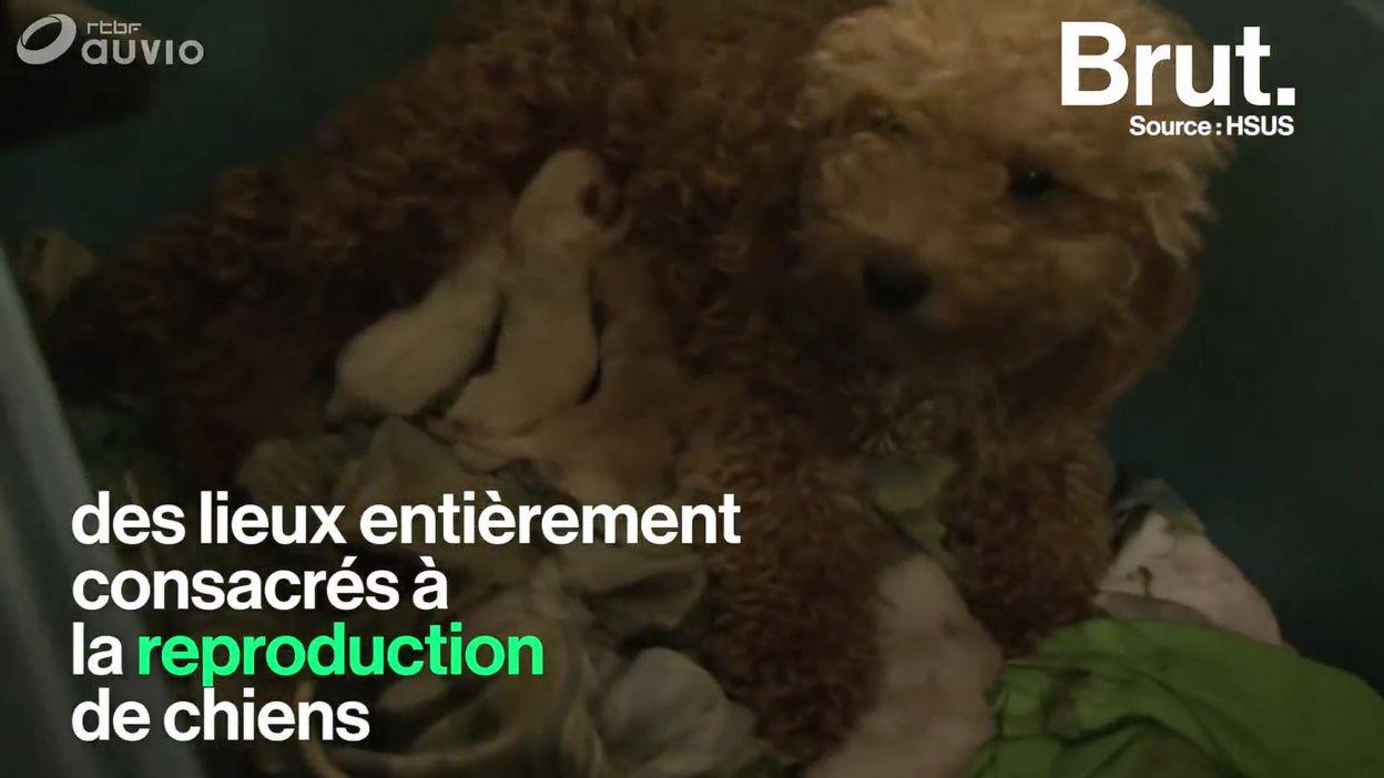 Californie : seuls les animaux de refuges seront vendus en animalerie