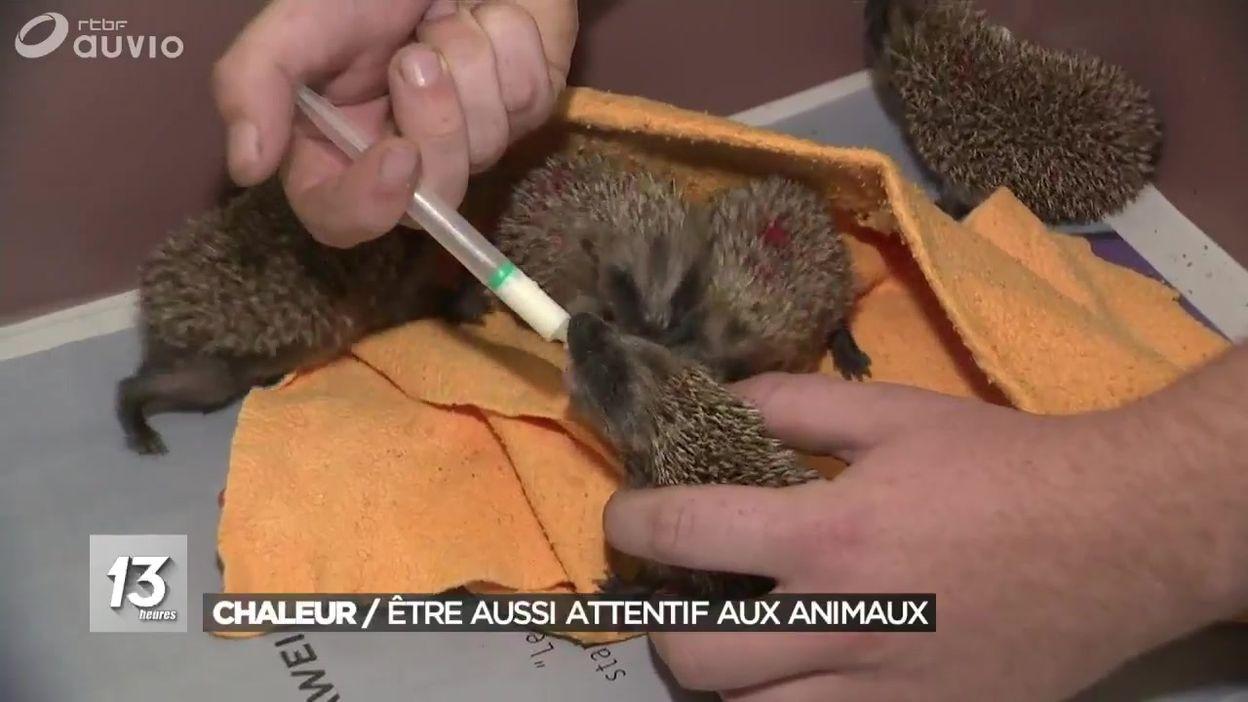 Chaleur : Être aussi attentif aux animaux