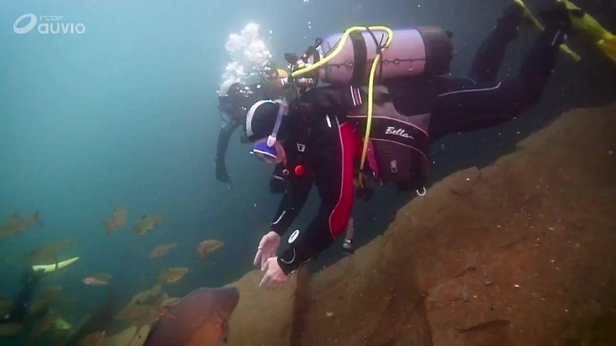 La Gombe :  un magnifique plan de plongée en eau claire
