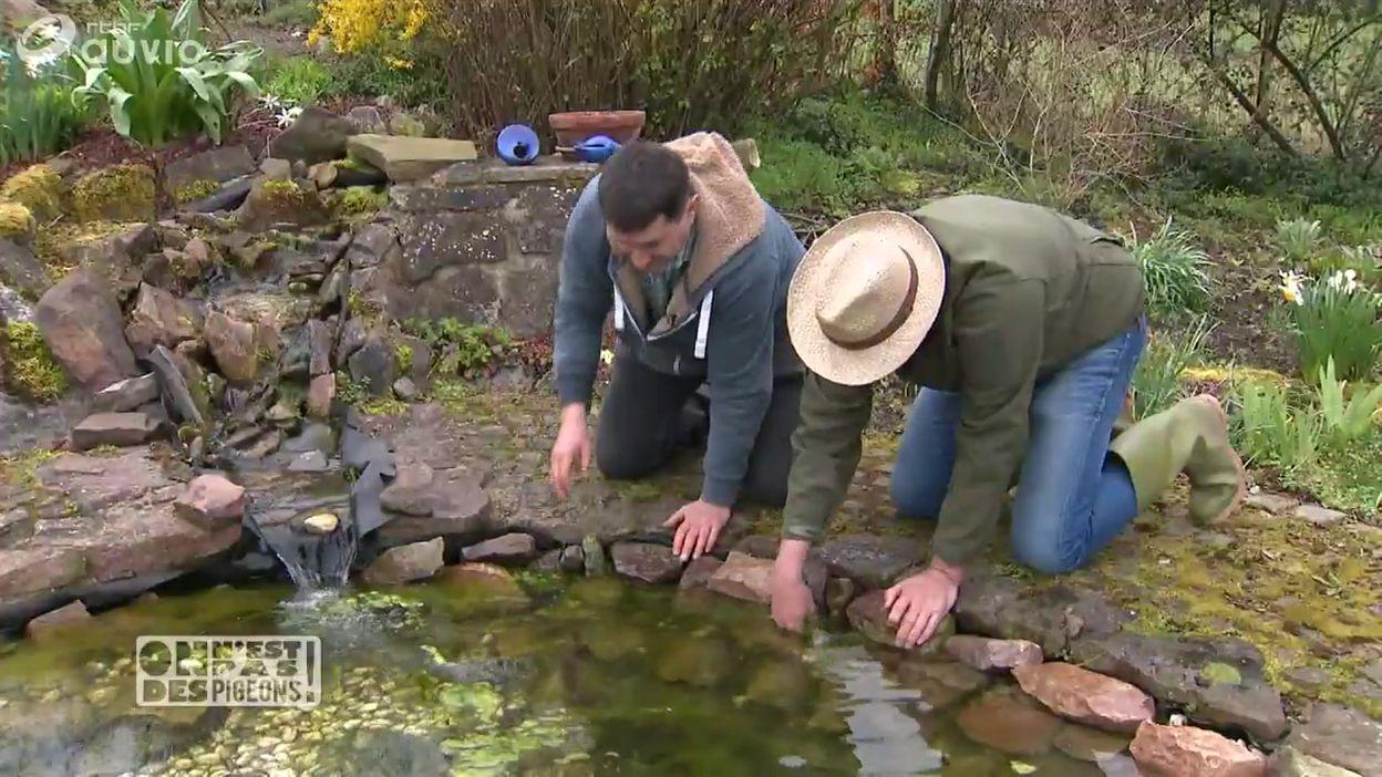 Bons plans jardin pour entretenir une mare d\'eau