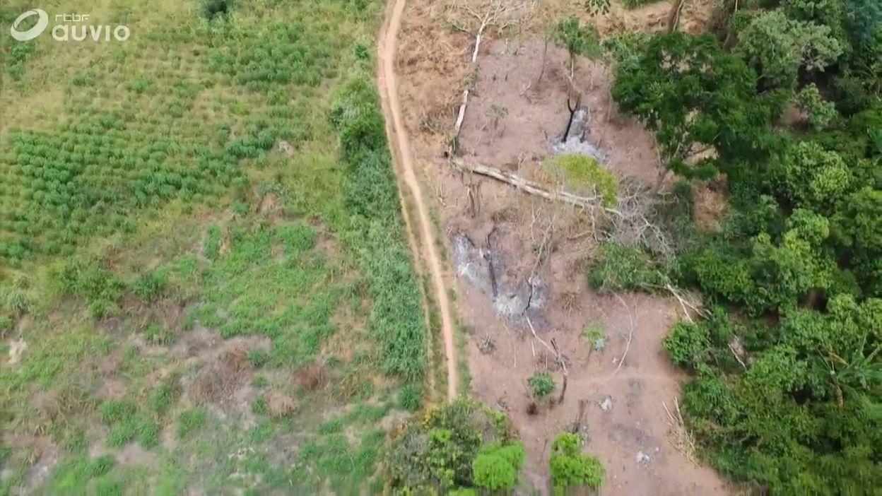 Côte d'Ivoire : le cri d'alarme des producteurs de cacao