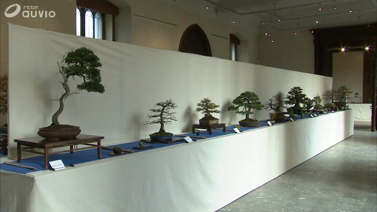 Quarante bonsaïs exceptionnels au château de Bouchout, à Meise