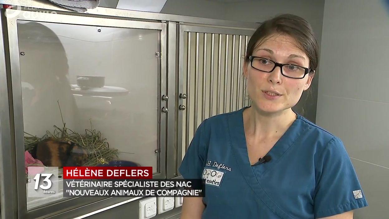 Une clinique pour rongeurs, reptiles, etc...