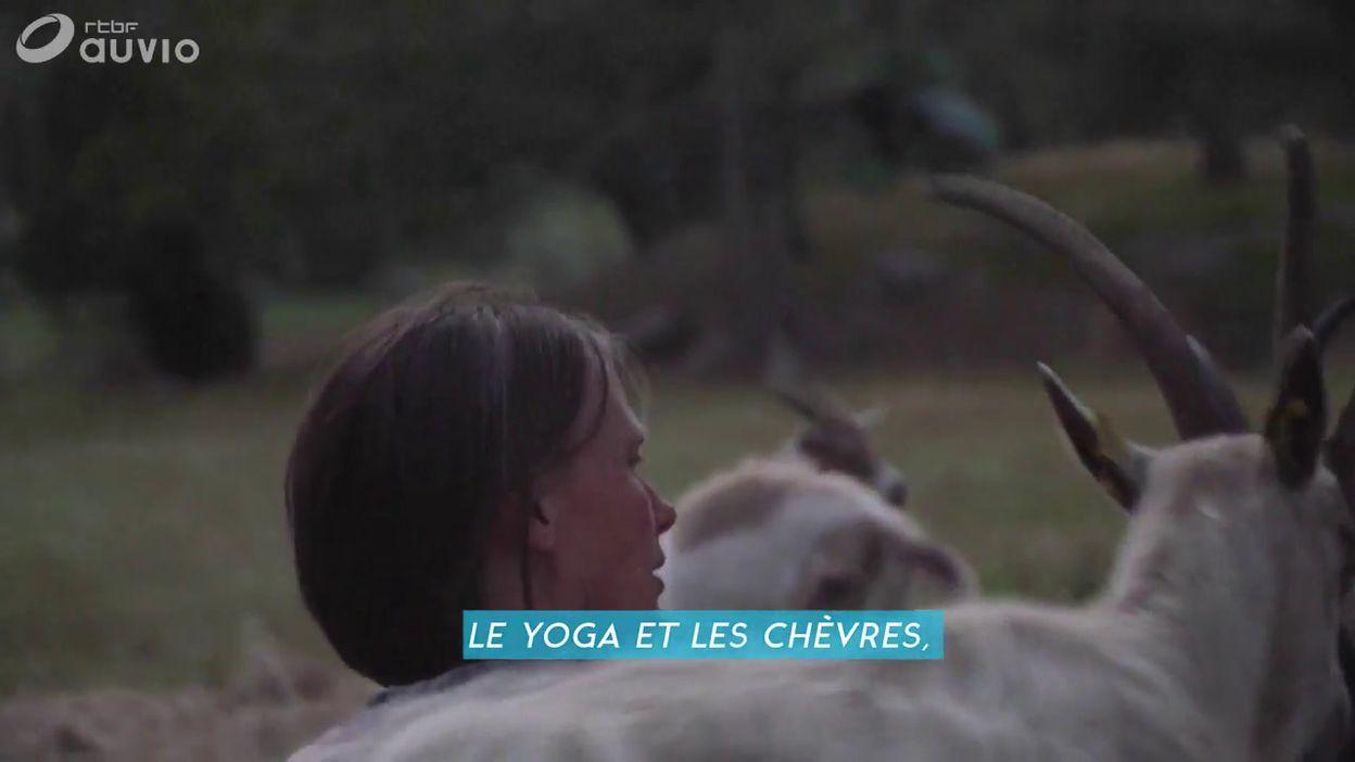 Les chèvres et le yoga