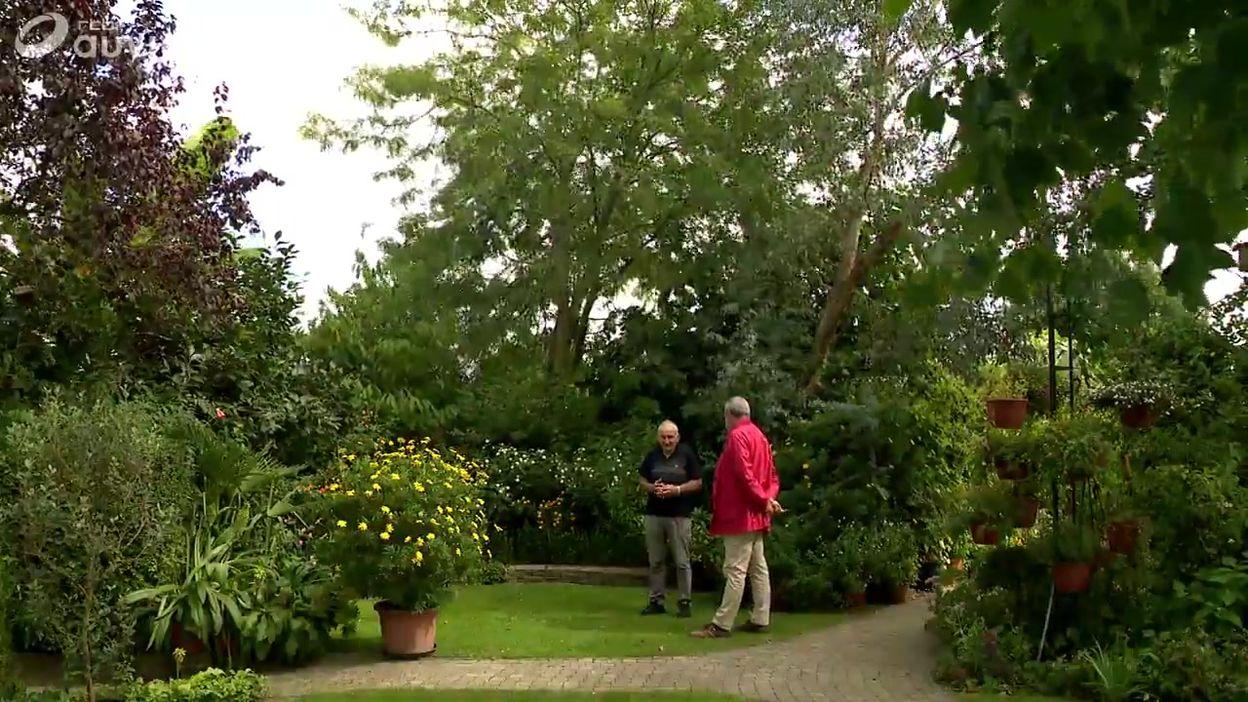 La collection d'arbustes à fruits de Danny à Hasselt