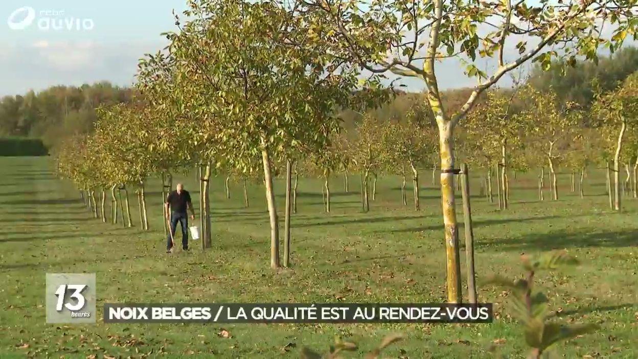 Noix belges : la qualité est au rendez-vous