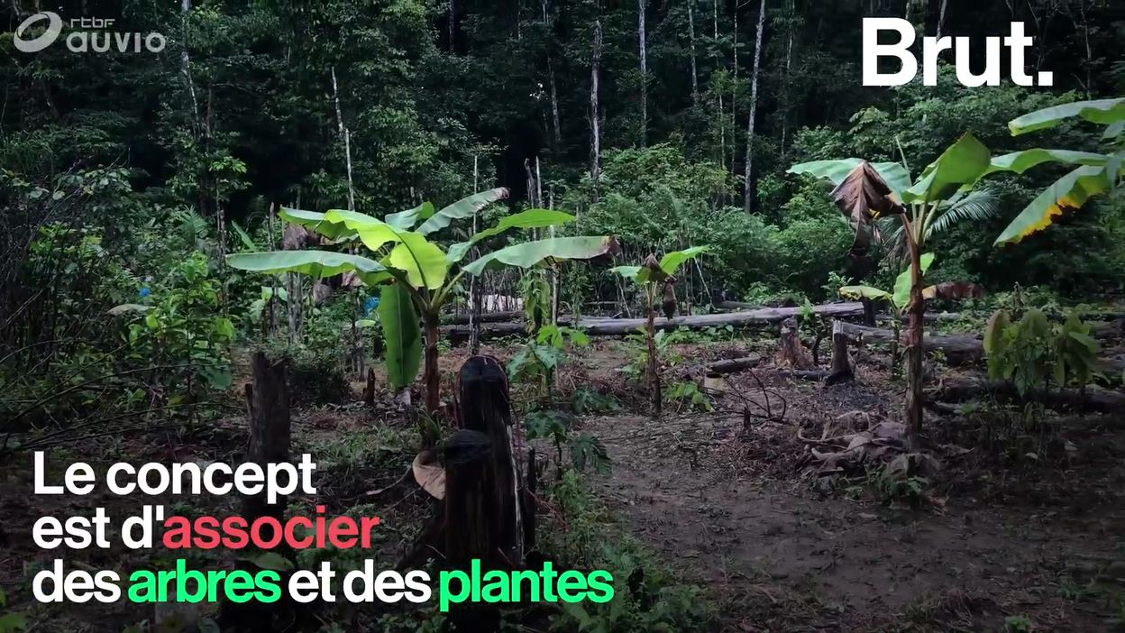 En Guyane, un paysan prône l'agroforesterie