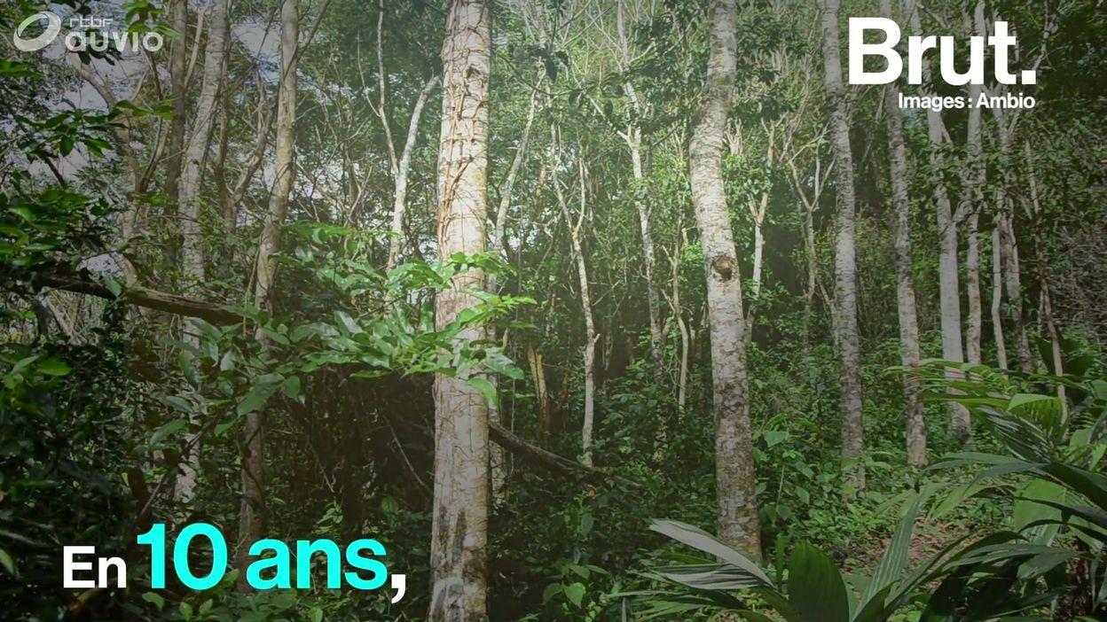 Reforestation, rémission du trou de la couche d'ozone...En 10 ans, les choses peuvent aussi changer pour le mieux