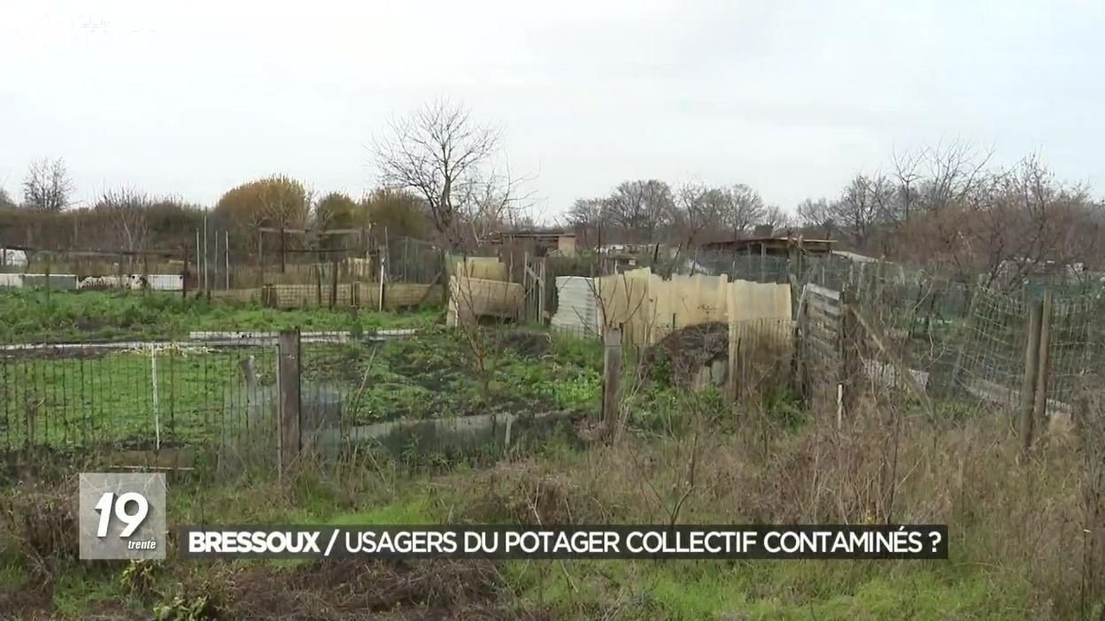 Un potager collectif pollué : 250 usagers contaminés ?
