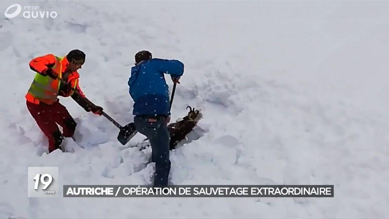 Sauvetage d'un chamois dans la neige