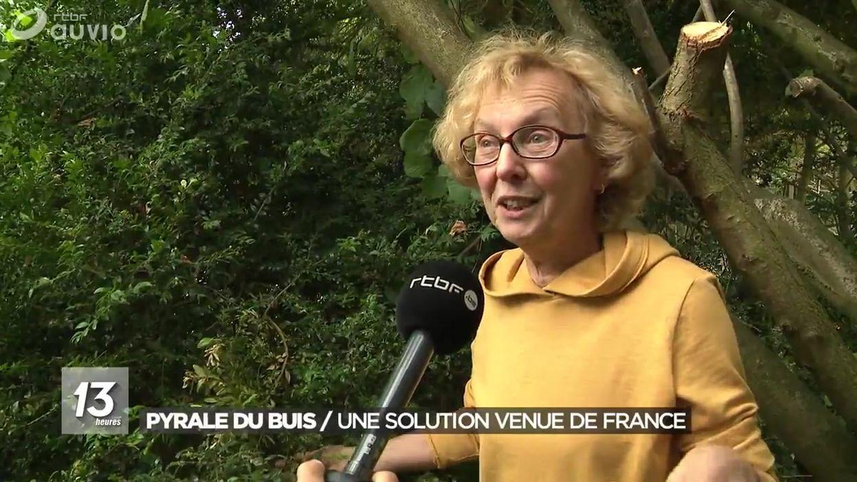La pyrale du buis : une solution venue de France