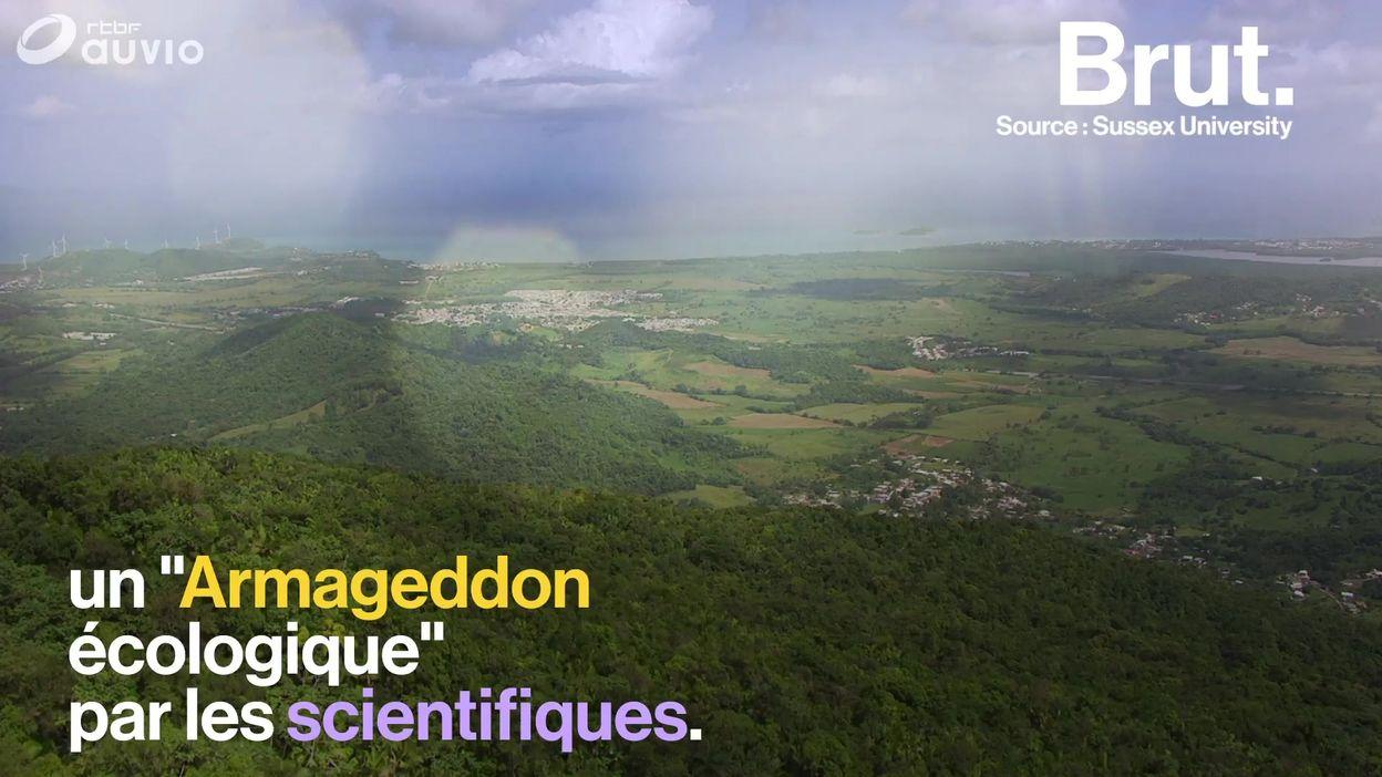 À Porto Rico, la disparition drastique des insectes inquiète les scientifiques