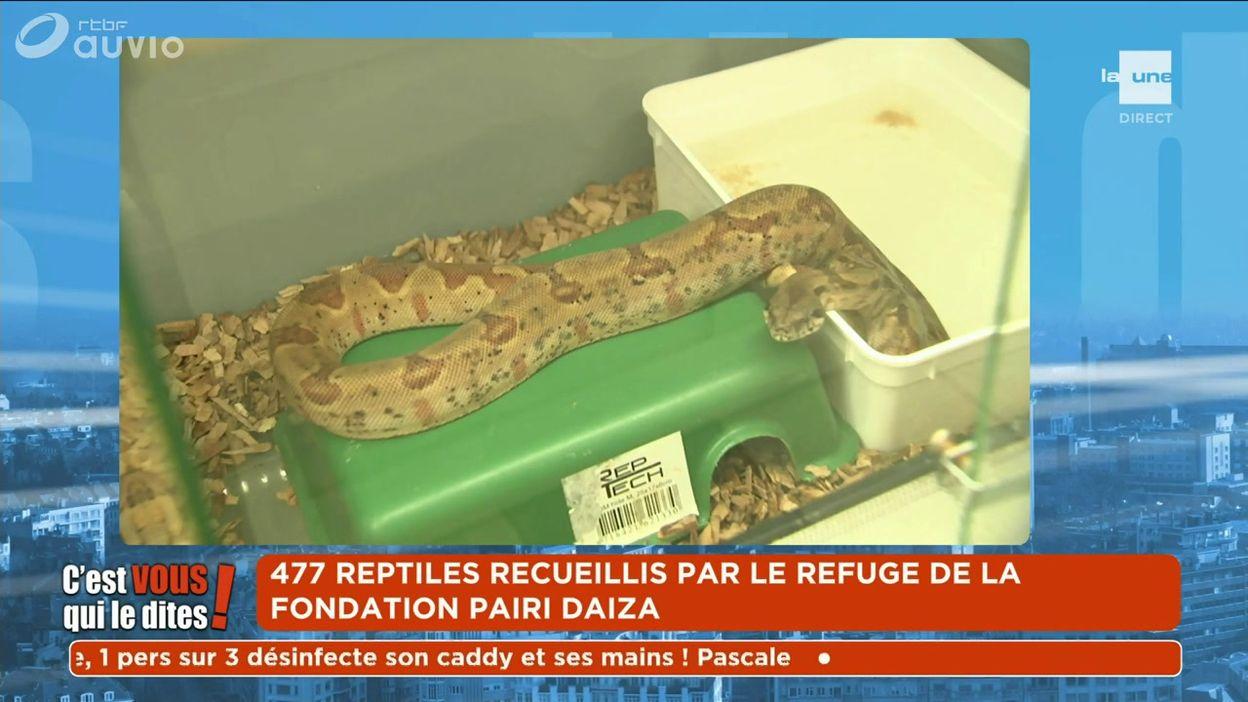 477 reptiles recueillis par le refuge de la Fondation Pairi Daiza
