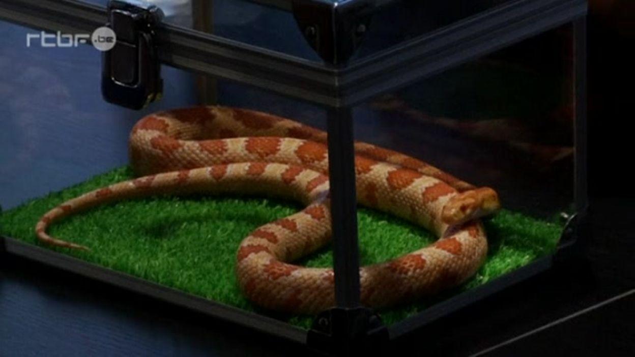 Tokyo ouverture d'un snake café