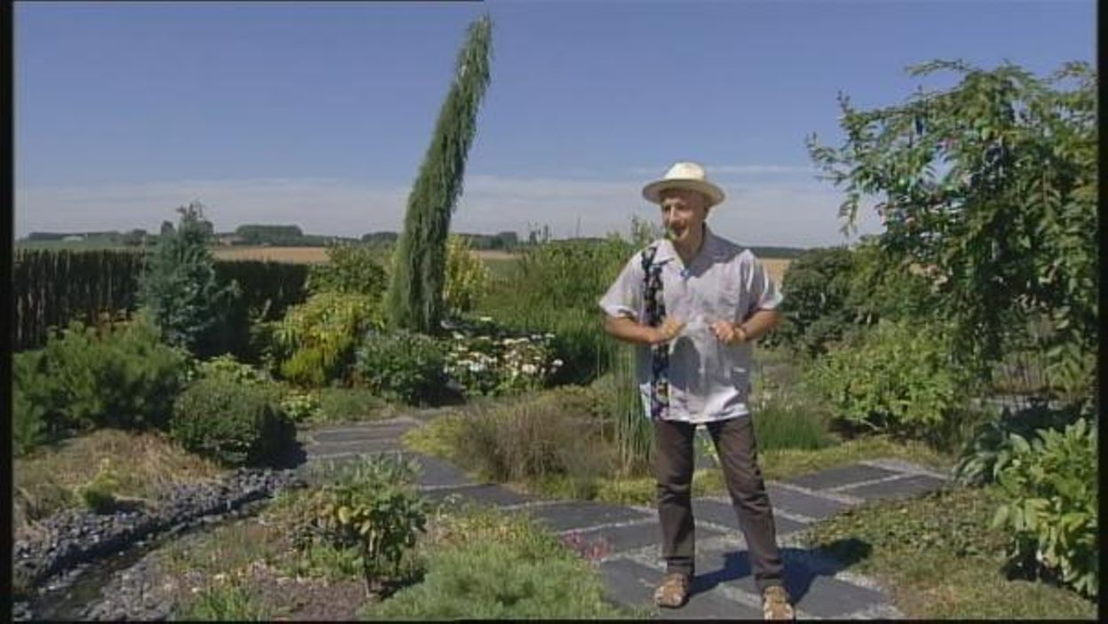 Francis Peeters - Sequoiadendron giganteum 'Pendulum'