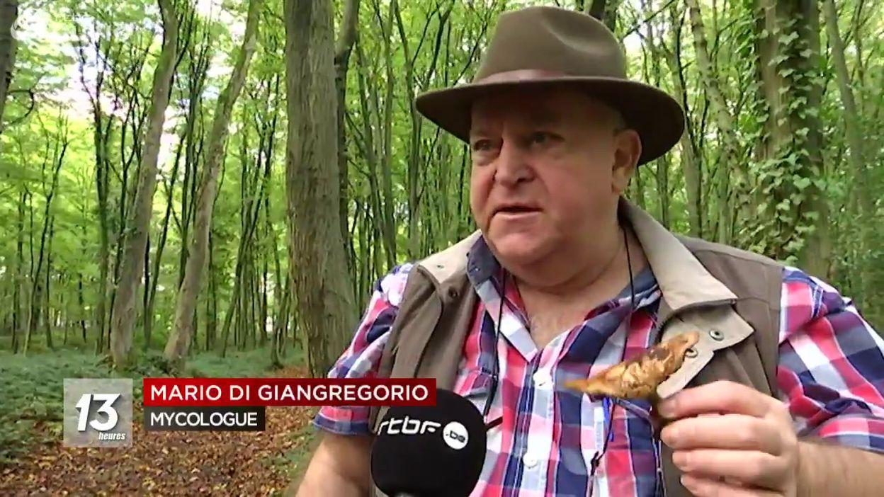Ceuillette des champignons : le centre anti-poison très sollicité