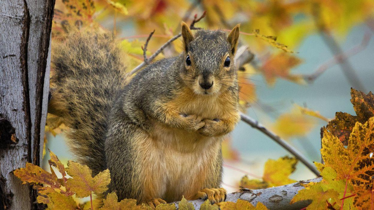 L'ecureuil, le petit lutin des bois !