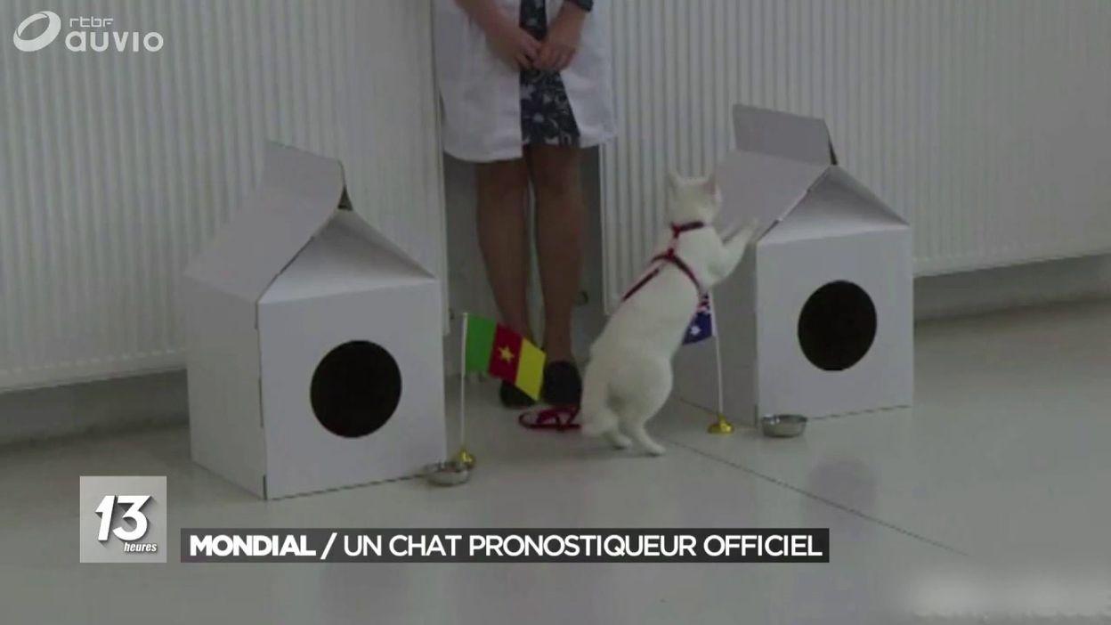Après Paul le poulpe, voici Achille le chat comme prédicateur de la coupe du monde