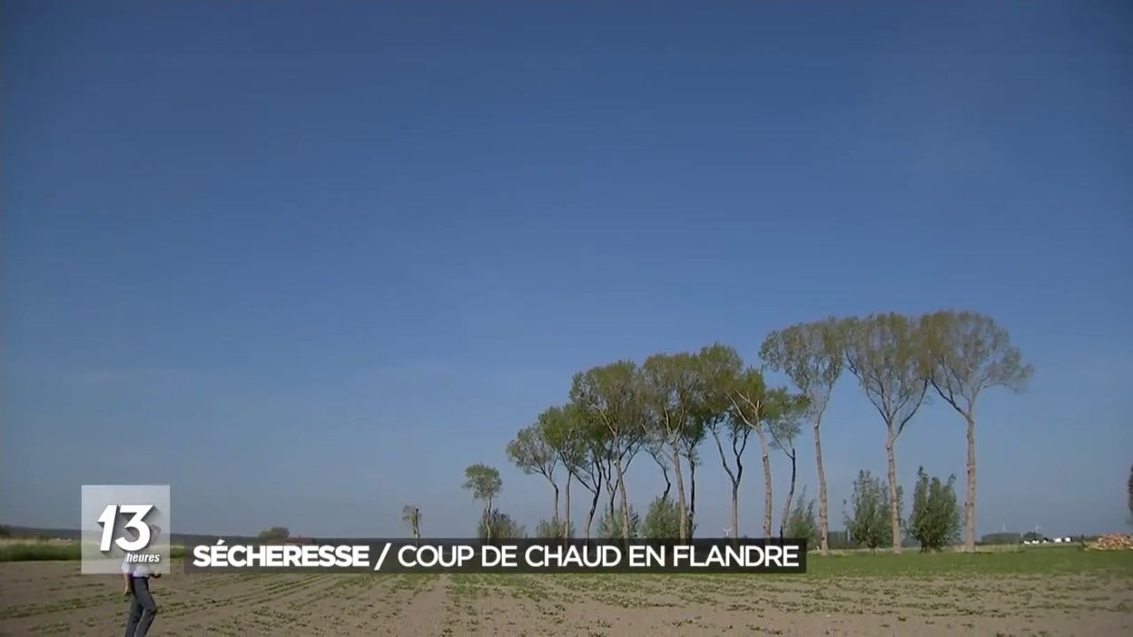 Sécheresse / Coup de chaud en Flandre