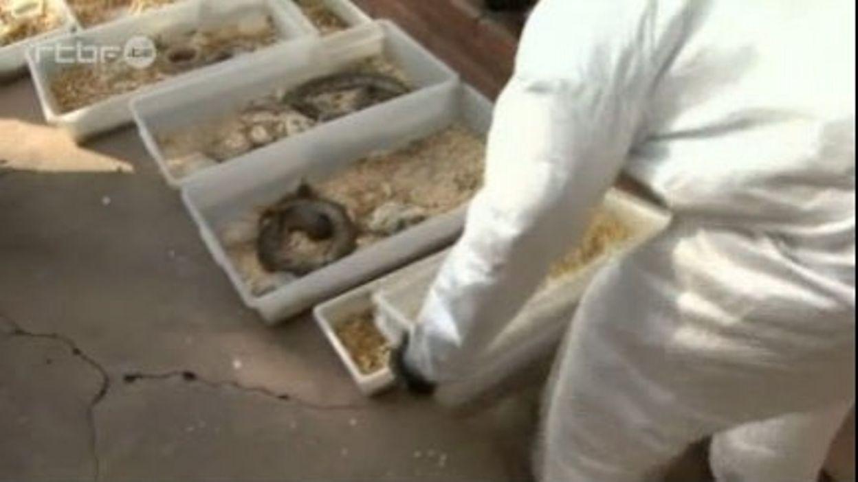 Entre 300 et 400 pythons retrouvés dans une maison de Caroline du Sud