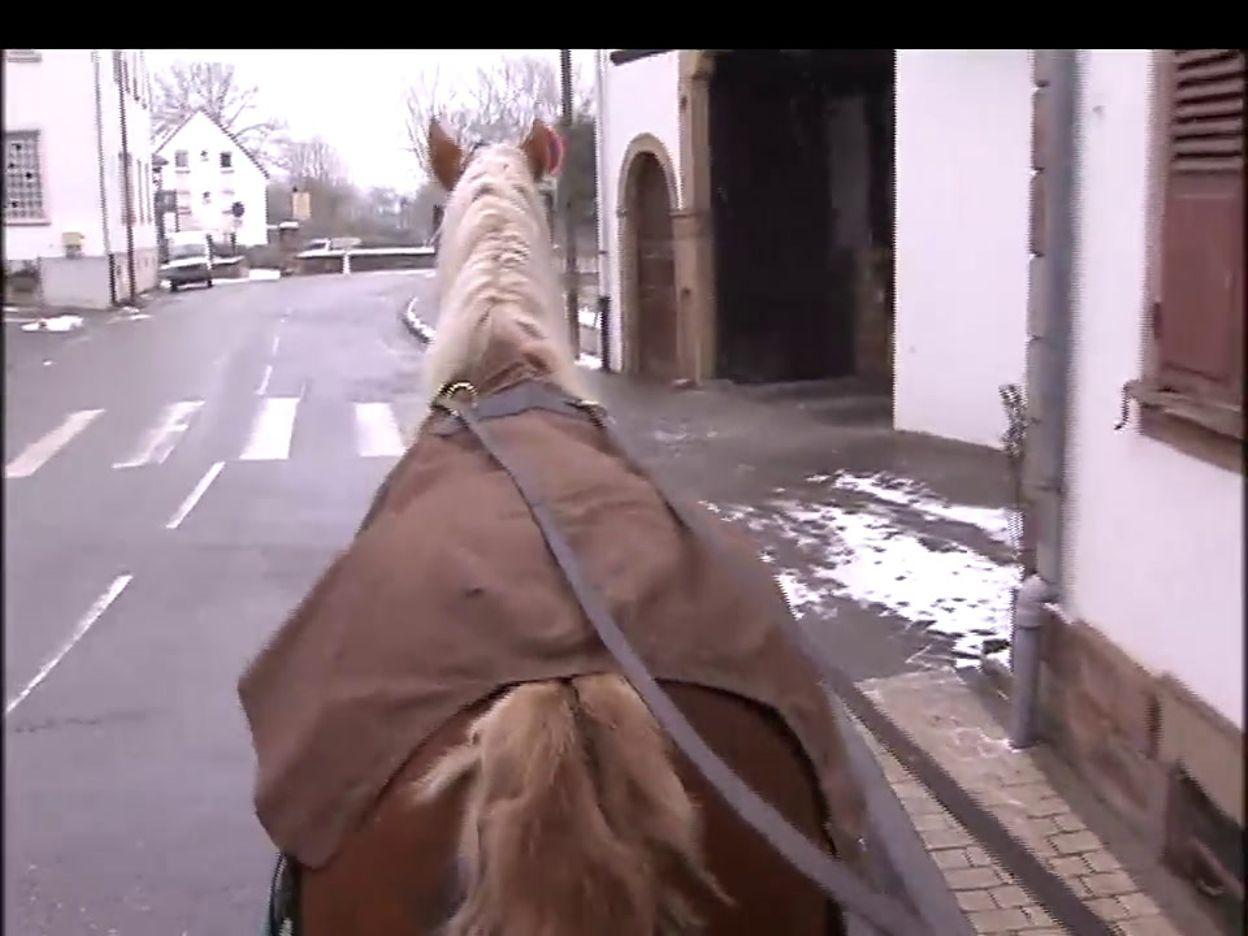 Les chevaux pour ramasser les poubelles à Schaerbeek