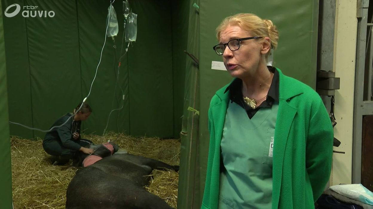 La myopathie atypique des chevaux