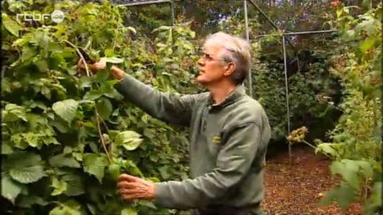 Une pépinière spécialisée dans les petits fruits : proefbessen