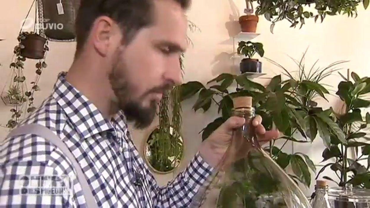 """Les Filles De L Air Plante les plantes tendances ? sans aucune racine ? les ''filles de l'air"""" ! - on  n'est pas des pigeons !"""