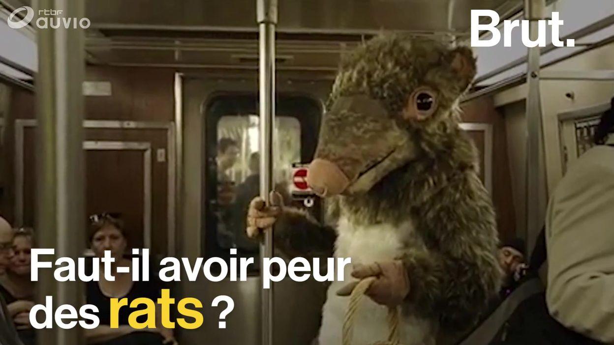 Faut-il avoir peur des rats ?